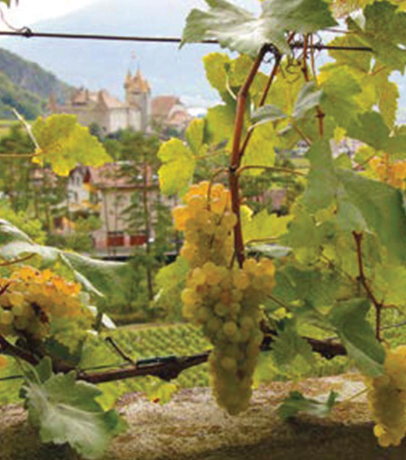 La Suisse Edelweiss